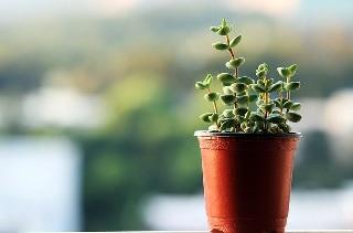観葉植物 癒し