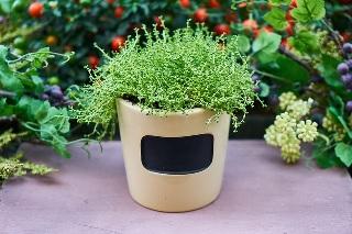癒し 観葉植物