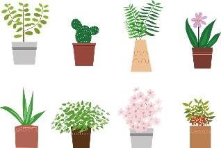 観葉植物 虫つかない