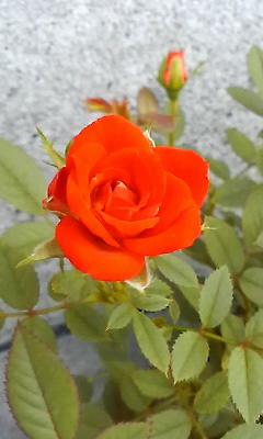 f:id:fessel:20110805113251j:image