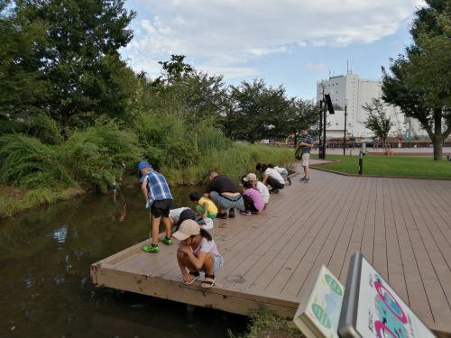 ザリガニ釣り 品川 港南緑水公園
