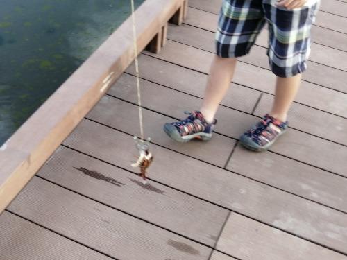 ザリガニ釣り 餌 釣り上げる