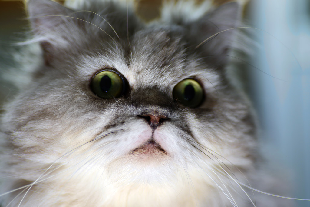 シリアスな猫