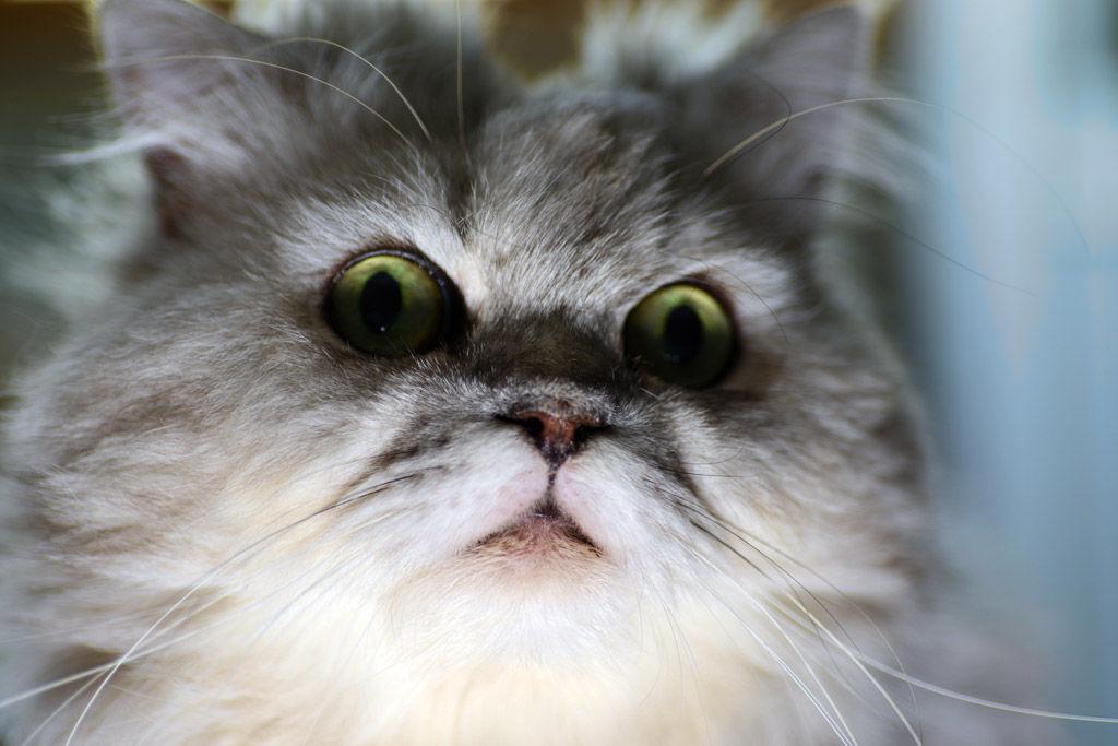 婚活地獄に陥った猫