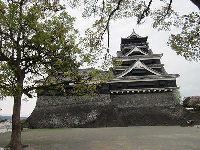 お城と翌檜の木の如き大木