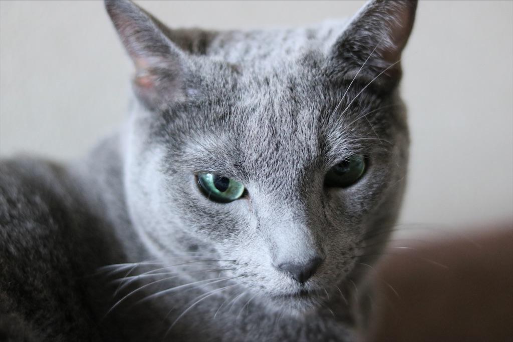 f:id:fighting_cat:20200527202751j:image