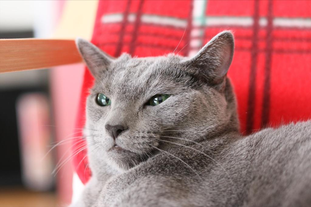 f:id:fighting_cat:20200528103058j:image