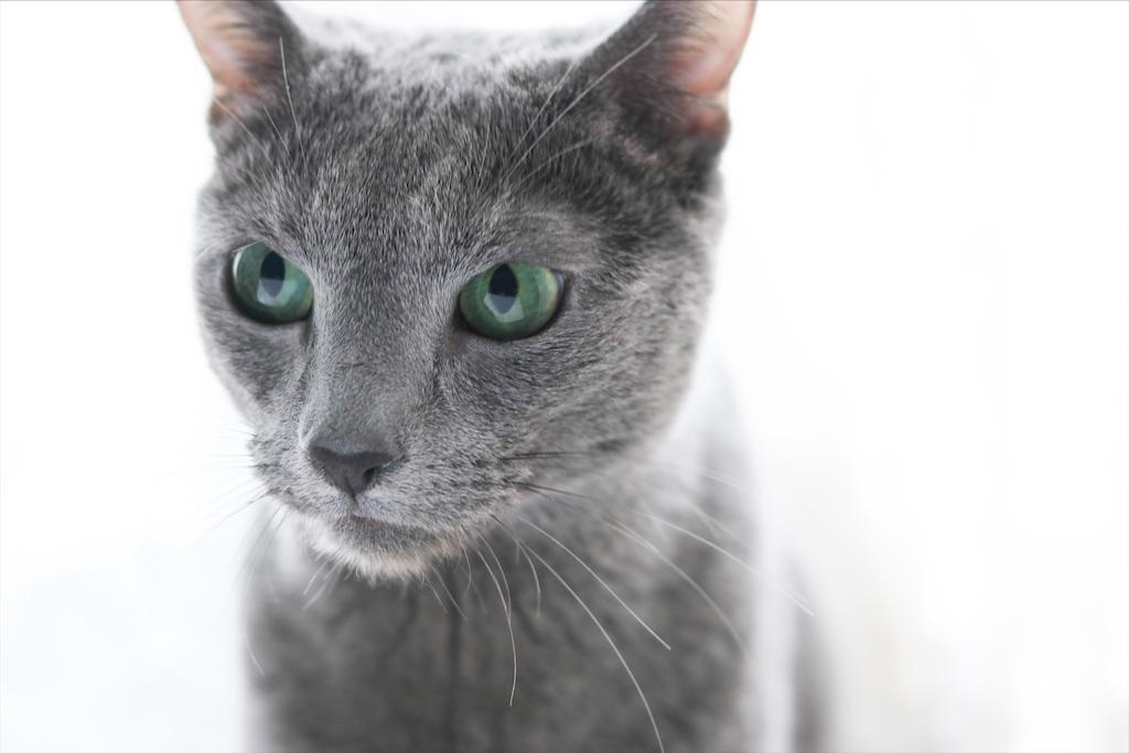 f:id:fighting_cat:20200529225055j:image