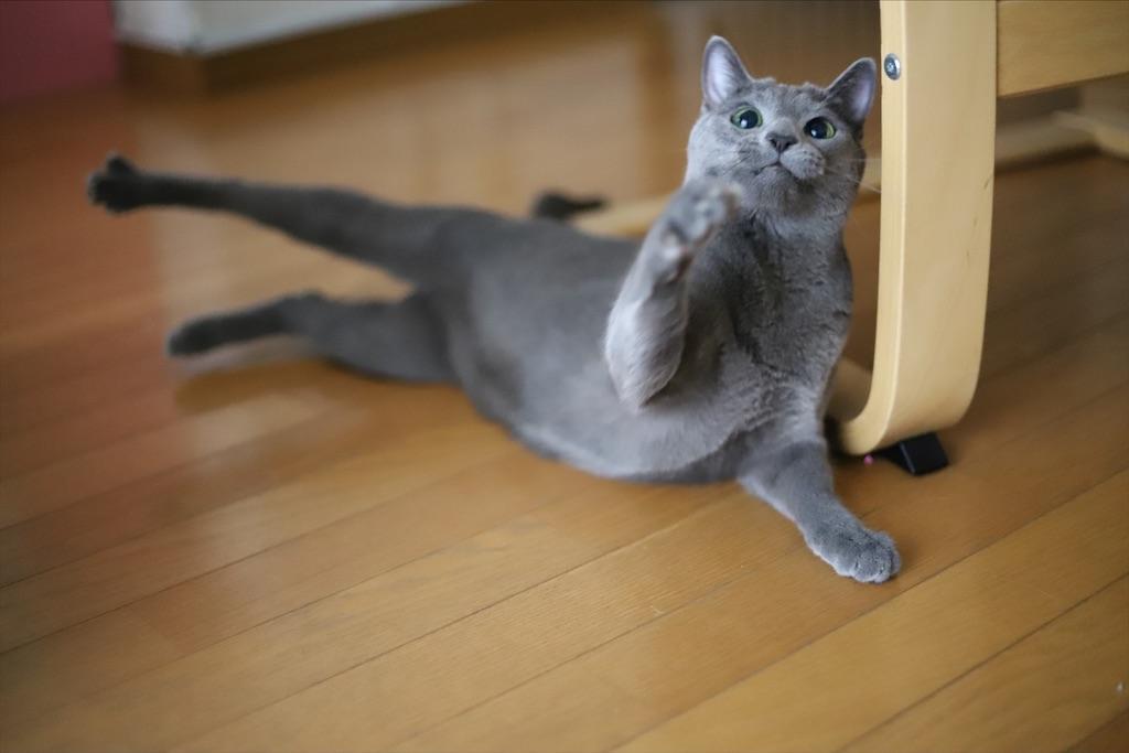 f:id:fighting_cat:20200730225220j:image