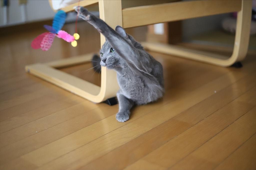 f:id:fighting_cat:20200730225230j:image