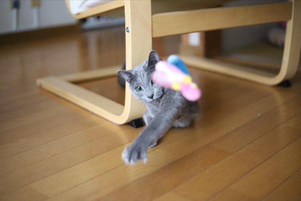 f:id:fighting_cat:20200730225253j:image