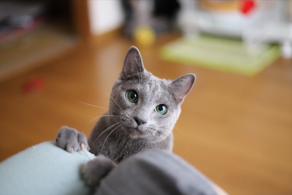 f:id:fighting_cat:20200730225344j:image