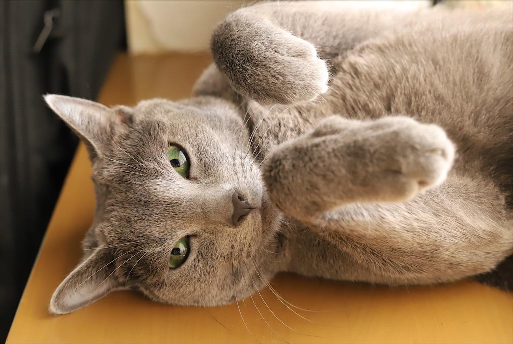 f:id:fighting_cat:20200804175410j:image