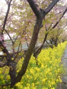 簿記とFPを今日も学ぶlog-sakura