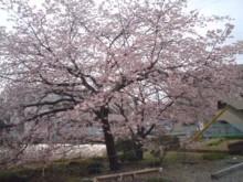 サムライTAX/税理士&FPのブログ-sakura2