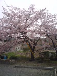 サムライTAX/税理士&FPのブログ-sakura1