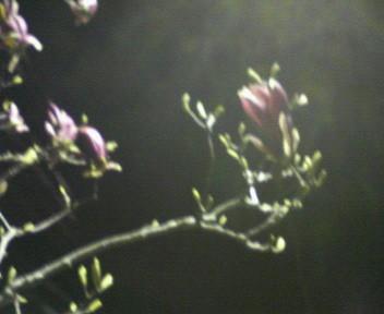 f:id:firesign0916:20060410001203j:image