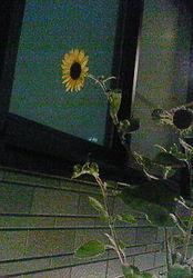 f:id:firesign0916:20071117225557j:image