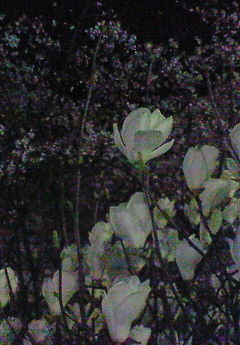 f:id:firesign0916:20080405010334j:image