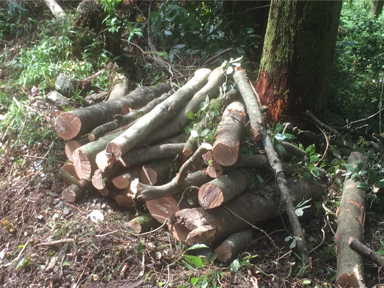 f:id:firewoodblog:20190525193813j:image