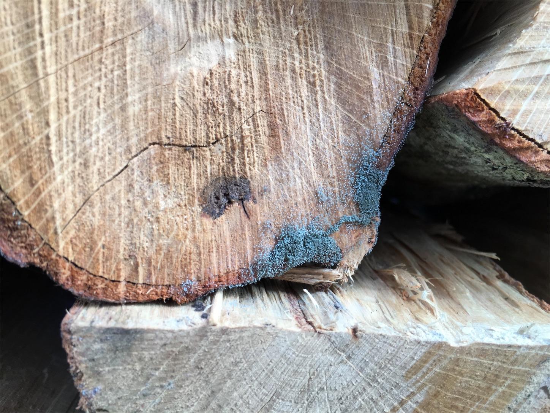 f:id:firewoodblog:20190704171128j:image