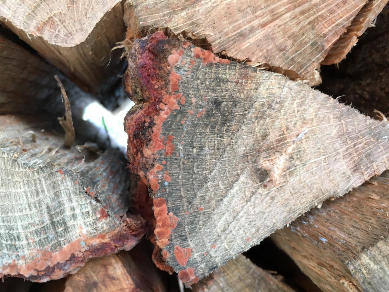 f:id:firewoodblog:20190704171156j:image