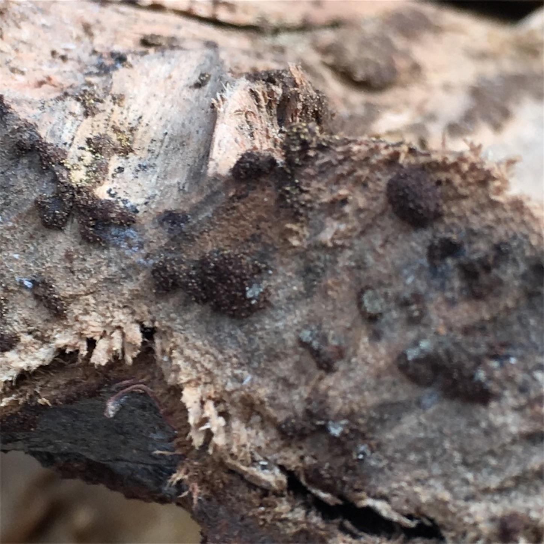 f:id:firewoodblog:20190704171640j:image