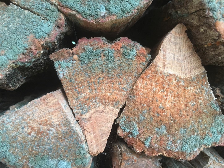 f:id:firewoodblog:20190718222828j:image