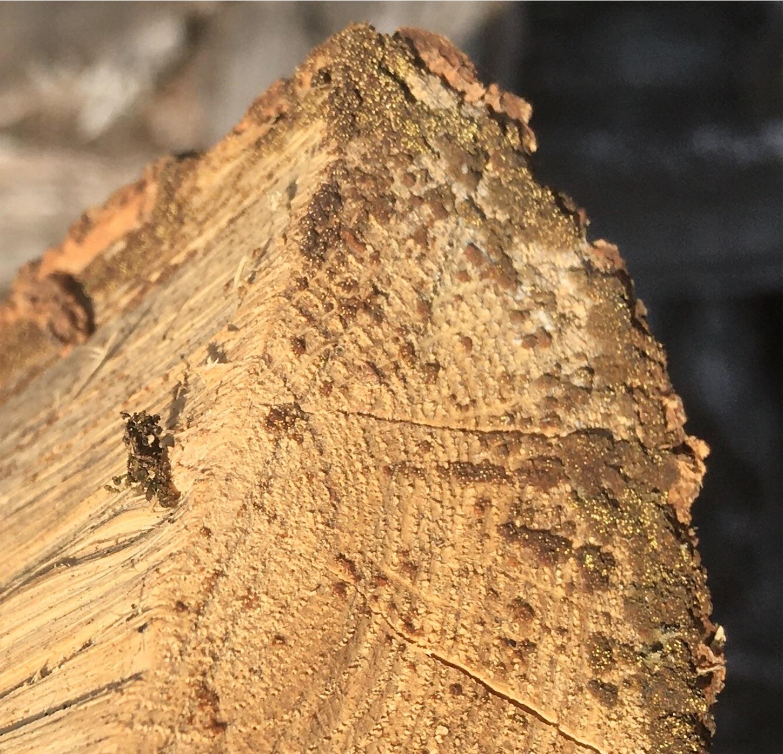 f:id:firewoodblog:20200124182719j:image