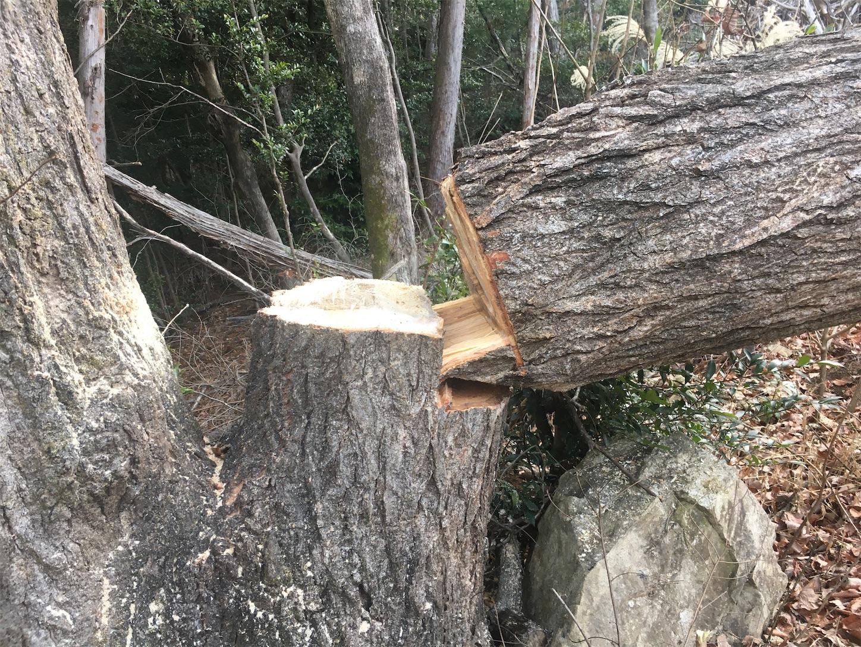 f:id:firewoodblog:20200130223804j:image