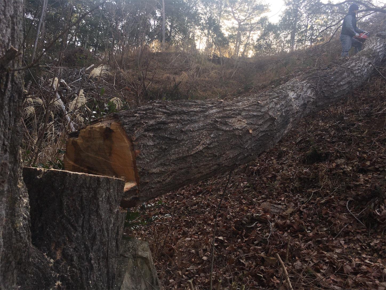 f:id:firewoodblog:20200130223828j:image