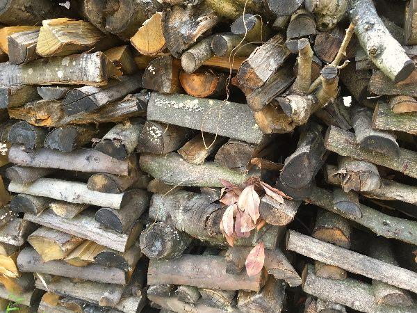 薪山崎の雨ざらし枝薪
