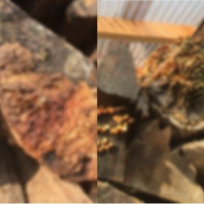 汚薪の汚い小口