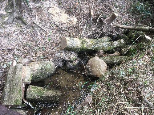 薪ストーブ用の原木を切りに行って思ったこと