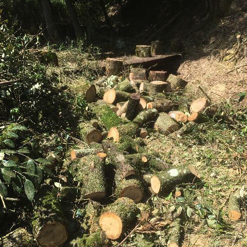 薪用原木の伐採をして「キツイ」と感じた作業まとめ