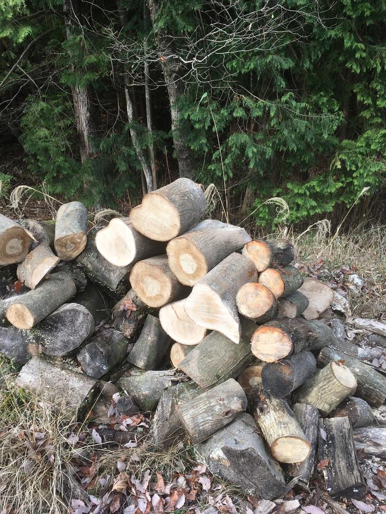 2019年最後の薪狩りに誘っていただいた!のと、そういう時に必要なものまとめ