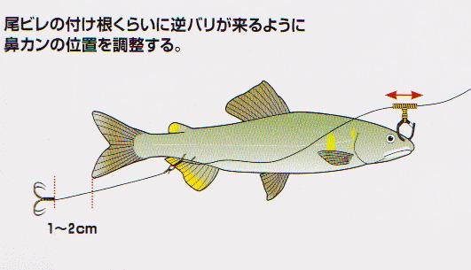 f:id:fish_tai:20190503004719j:plain