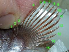 f:id:fishinfish2010:20111219104624j:image