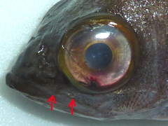 f:id:fishinfish2010:20111219104625j:image