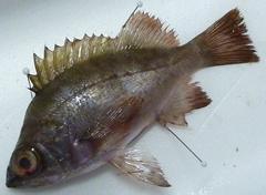 f:id:fishinfish2010:20111219104626j:image