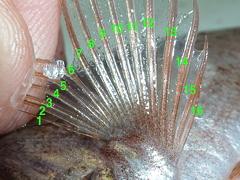 f:id:fishinfish2010:20111219110107j:image