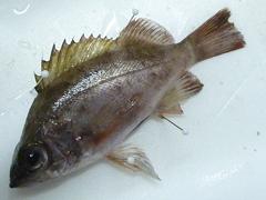 f:id:fishinfish2010:20111219110113j:image
