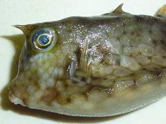 f:id:fishinfish2010:20120105034441j:image