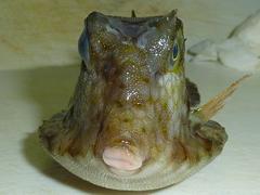 f:id:fishinfish2010:20120105034442j:image