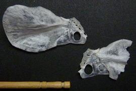 f:id:fishinfish2010:20120105040324j:image