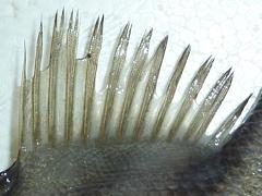 f:id:fishinfish2010:20130213153144j:image