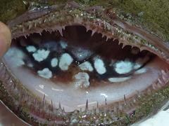 f:id:fishinfish2010:20130214153845j:image