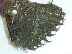 f:id:fishinfish2010:20130214163715j:image