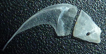 f:id:fishinfish2010:20130218144522j:image