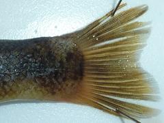 f:id:fishinfish2010:20130419170708j:image